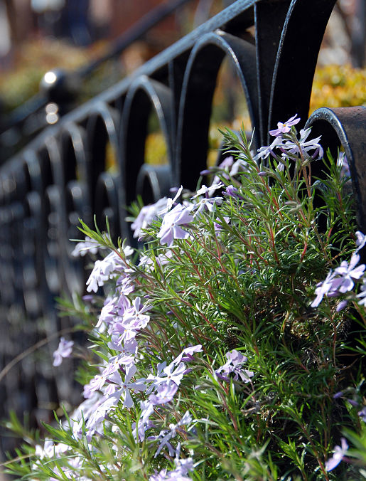 spring flowers wrought iron fence