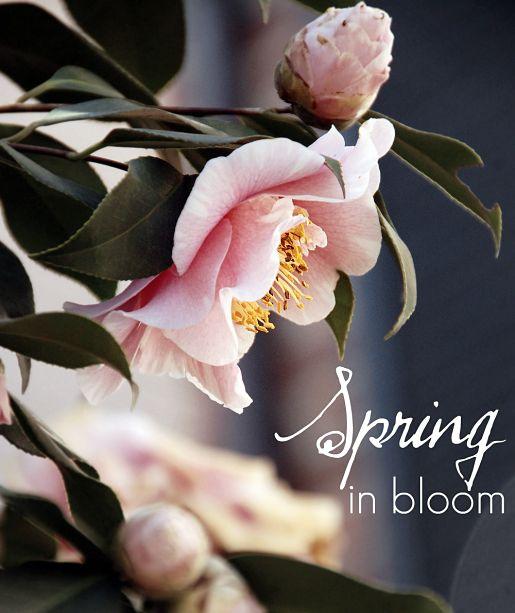 spring blooms flowers
