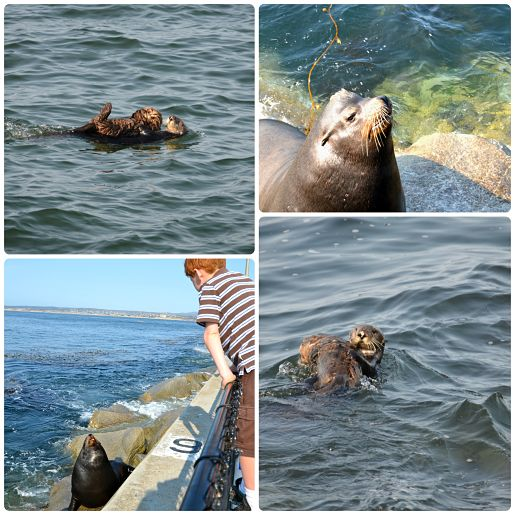 Monterey sea otters and sea lion