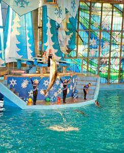 Dolphin show at Sea World, San Antonio TX